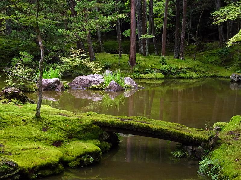 Сад мхов Сайходзи в Киото, Япония