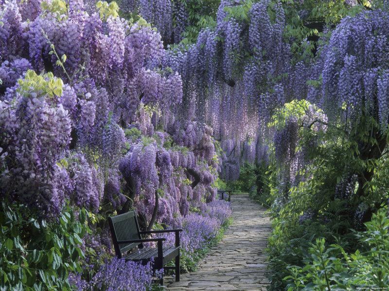 Японский парк Кавати Фудзи