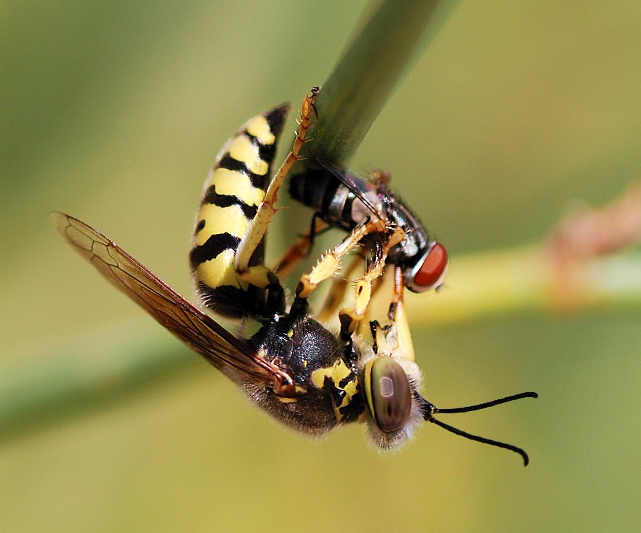 the-10-deadliest-insects-in-the-world-4
